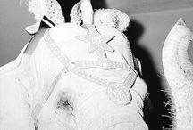 M.M. / Sognate in grande, non c'è altro da fare. Per quanto ne sappiamo, ci è concessa una sola occasione, quindi abbandonate le vostre paure e vivete i vostri sogni. Marilyn Monroe.