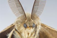 Moths, butterflys and random insects