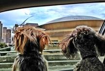 saints dogs