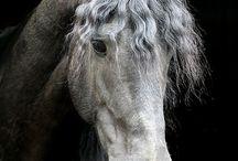 koně Lucka