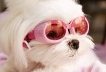 The real pet fashion...❤️