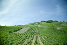 German Wine Country / a collection of photos from the Mosel-Saar-Ruwer wine region of Germany