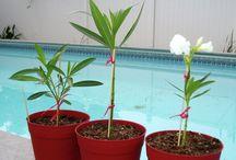 Növény-Kert