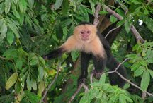 Nature in Costa Rica / Our largely tropical climate supports a rich variety of flora and fauna (from monkeys and sloths to birds and reptiles).