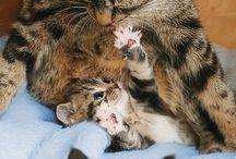 kittums / by Julie Phillips