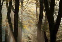 Moodboard Wald