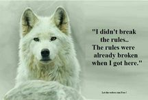 Save wild and domesticated animals