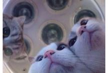 Cat / Lovely Cat~♡