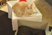 I've got a cat now / by Kimberly Sook