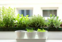 {Home} Indoor Gardening