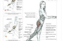 musculs workout