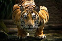 Natureza animal