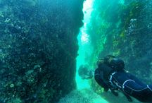 Cape Town Scuba Diving / All of our latest diving photo's in and around Cape Town ranging from diving through Kelp Forests, with Sharks, with Seals and Shipwrecks.