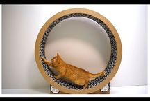 cat wheels