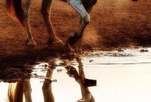 Horses / Loving animals