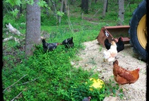 Growing Feed for Farm Critters