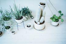 Plant life / by Melanie Watkins