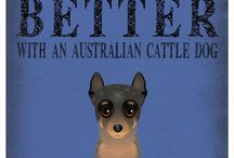 Australian cattle dog - the dog of my life