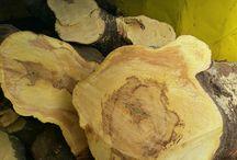 Heritage Tree Care