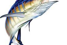 marlin fish dad
