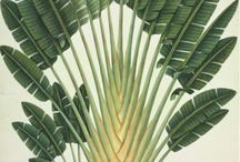 Tropical & botanical moods