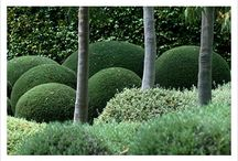 Topiary / by Mary Henderson Maurel