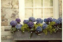 garden / by Irene King