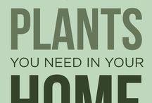 Planten zuurstof