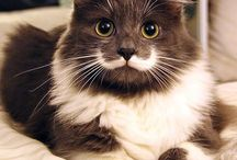 Gatos charmosos