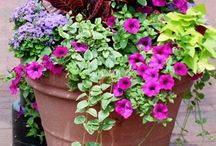 Plant combinations in pots