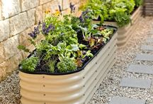 Gardening / Planting and storing vegetables and fruits