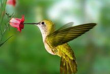 маленькие пташки
