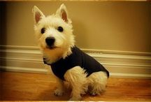 roupa pra cachorro