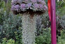 Vet Plante / Mini Tuin