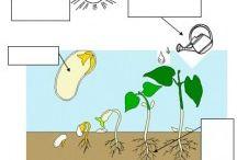 φυτό-εξέλιξη