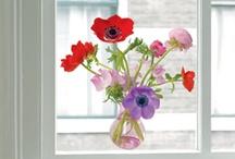 Flowers make me Happy / by Ineke > vorm-en-kleur.nl