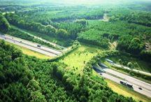 Landscape -Bridges