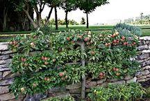 Шпалерное садоводство