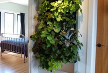 Wall Planters / Vertical Gardens / try to aim for self irrigating ones. reuse of excess water is even better!