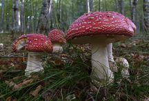 Setas y hongos de Andalucia / Variedades de hongos y setas existentes en los campos montes y bosques de Andalucia