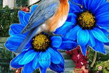 ..MY LOVE, THE BIRDS..!!