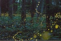 Storylands: Queen of the Fireflies / Queen of the Fireflies, a work-in-progress, takes place in 1976 Indiana. / by Cat Rambo