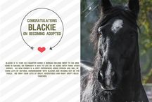 Happy Tails / Happy Tails of previous Circle F Horse Rescue Horses and how they are doing now in their forever homes