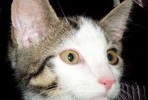 Miss Lili / Ich stelle euch Miss Lili vor meine kleine süße Katze.