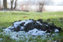 Ein bisschen Schnee 01 | 17