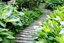 Trädgård-gångar