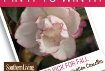 Pin it to Win it! / by Southern Living Plant Collection