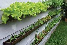 Trädgård och odling