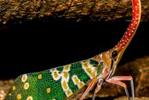 Amazing Pictures-Insects / Discover amazing picture of insects.