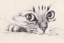 Cat drawings or cats